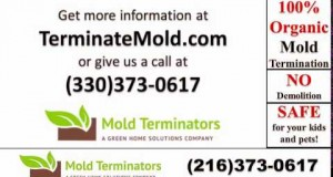 Canton-Mold-Removal-Mold-Remediation-Canton