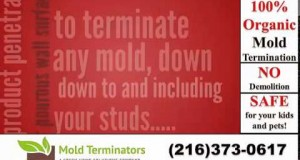 Cleveland-Mold-Removal-Cleveland-Mold-Remediation