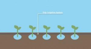 Green-Mountain-Energy-Eco-Tips-In-the-Garden