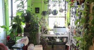 How-to-Green-Your-Home-Part-1-Build-an-Indoor-Vertical-Garden